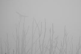 """Frank Brehe """"Adler im Nebel"""""""