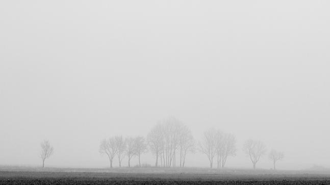 "Frank Brehe ""Nebelbäume"""