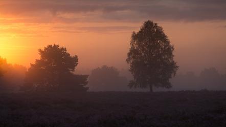 "Frank Brehe ""Sonnenaufgang II / Nemitzer Heide"""