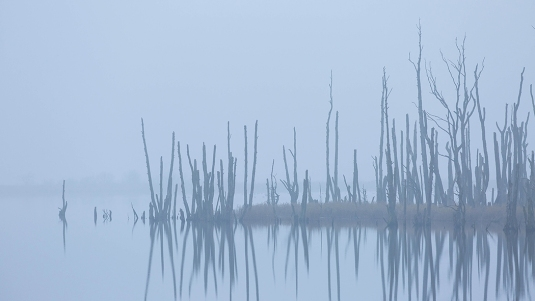 "Frank Brehe ""Totholz im Nebel"""