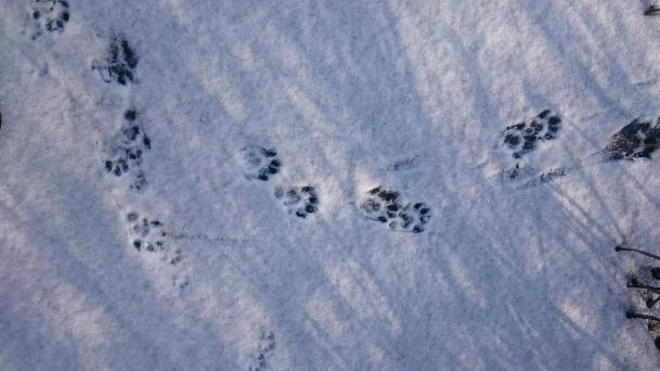 "Frank Brehe ""Otter im Schnee"""