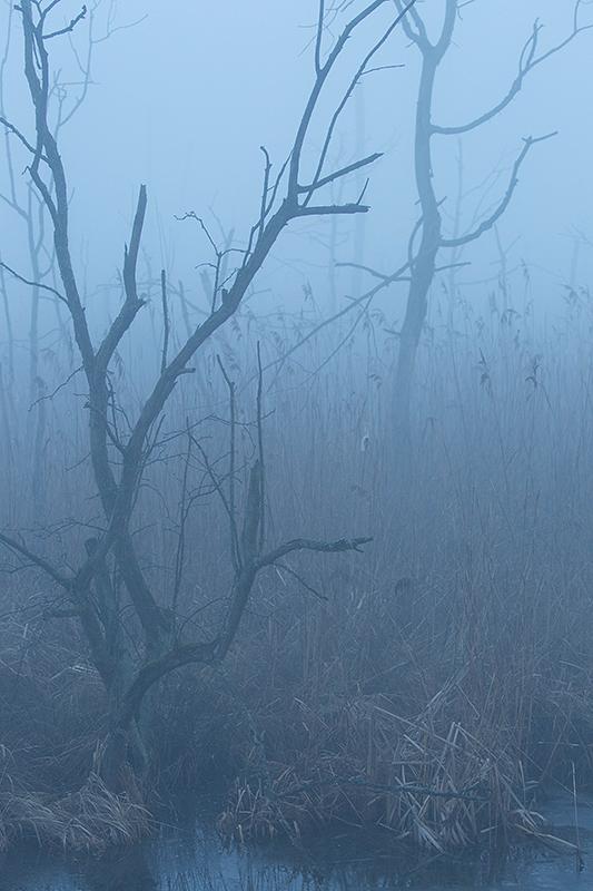 "Frank Brehe ""Nebel am Morgen"""