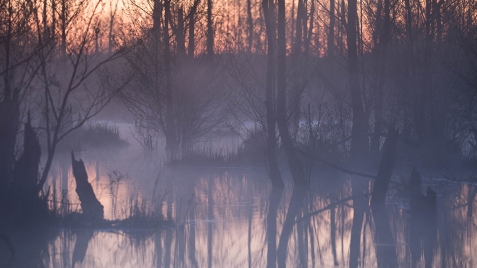 "Frank Brehe ""Nebel im Bruch"""