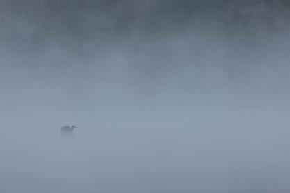 "Frank Brehe ""Im Nebel"""