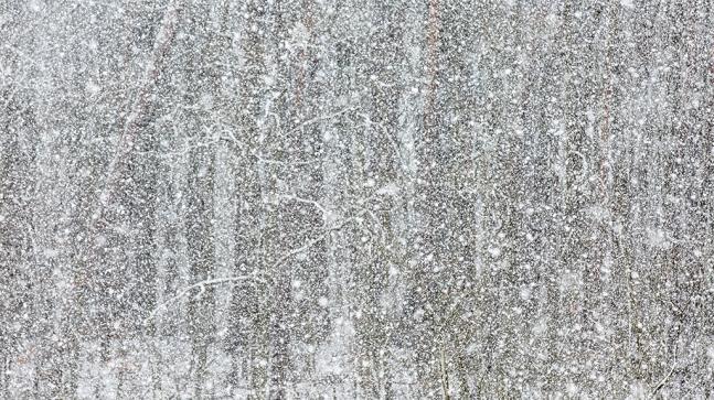 """Frank Brehe """"Schneetreiben"""""""