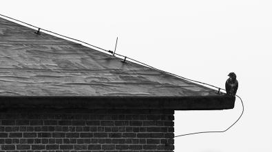 """Frank Brehe """"Auf dem Dach"""""""
