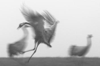 "Frank Brehe ""Landung im Nebel"""