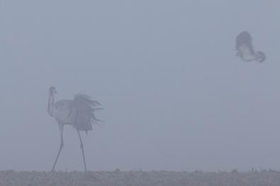 """Frank Brehe """"Streit im Nebel II"""""""