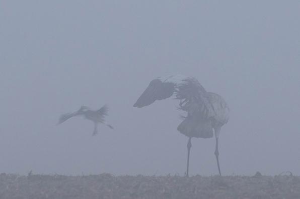 """Frank Brehe """"Streit im Nebel V"""""""
