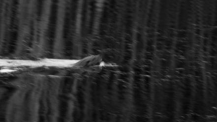 """Frank Brehe """"Otter-Beleg"""""""