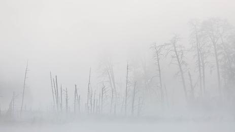 "Frank Brehe ""Weißer Nebel 1"""