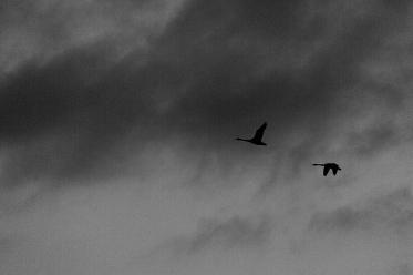 """Frank Brehe """"Über den Wolken"""""""